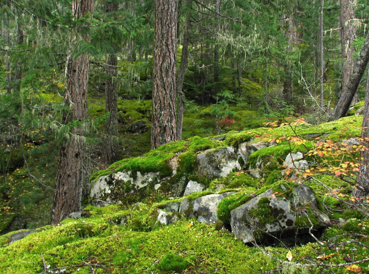 Mossy Rocks and Trees by Bob Brett.jpg